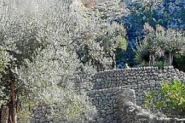 Die Schlucht von Biniaraix gehört zu den beliebtesten Wanderrouten Mallorcas.