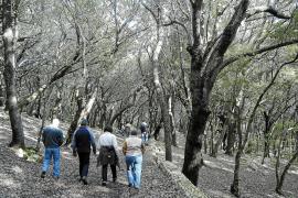 In Eichenwäldern (wie hier auf dem Landgut Gabellí Petit bei Campanet) herrscht häufig eine ganz besondere, magische Atmosphäre.