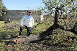 400 Mandelbäume illegal gefällt