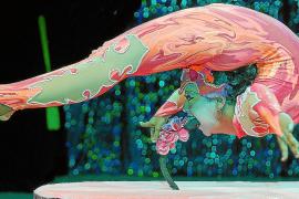 Zirkus, Musical und große Show