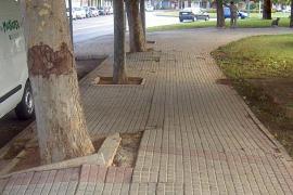 Die Wurzeln der Bäumen beschädigen das Gehwegpflaster
