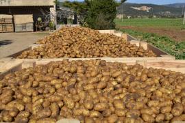 Kampf dem Kartoffelkäfer