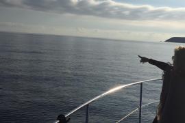 Delfine vor Puerto Portals.