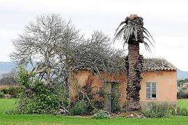 Verendete Palme, verwilderter Feigenbaum, verfallenes Bauernhaus. Die Landwirtschaft rund um den Flughafen ist so gut wie tot.