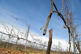 Anschlag auf Mallorcas bekanntestes Weingut