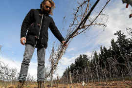 Weingutdirektor Pep Lluís Roses besieht sich sich den Schaden.
