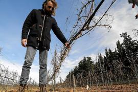 Polizei geht bei Weinstock-Zerstörung von Racheakt aus