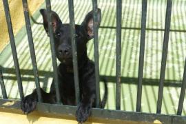 Tierheime: Petition gegen Tötungen