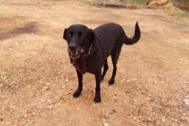 Hund im Tierheim von Son Reus.
