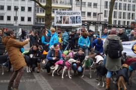 Mallorca-Hunde bei Protestmarsch in Köln