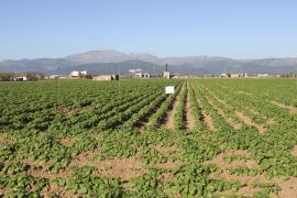 Aktionsplan gegen Kartoffelklau