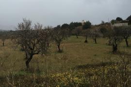 Grauer Himmel und Nieselregen am Montagmorgen bei Palma.