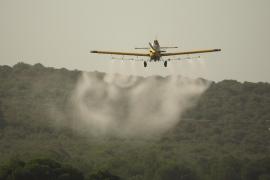Kein Raupen-Gift aus der Luft