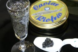 Kaviar wird wieder erschwinglich