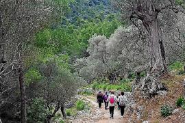 Zu Fuß über die Finca Planícia