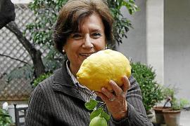 Mallorca-Zitronen so groß wie Melonen