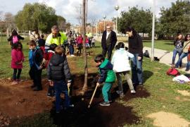 Die ersten Bäume in dieser Woche pflanzten die Gründschüler im L'Arabela-Park im Stadviertel La Vileta-Son Rapinya in Palma de M