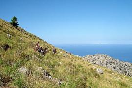 Neue Weitwanderwege für Mallorca
