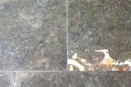 Geologe entdeckt 45 Millionen Jahre alte Seekuh