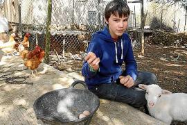 Auch um die Hühner kümmert sich der Zwölfjährige - meist frühmorgens, wenn die anderen noch schlafen.