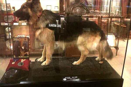 Hund Ajax kommt ins Polizeimusum