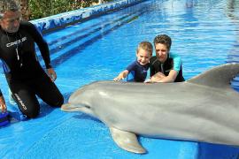 """Ganz schön groß und ganz schön glitschig: Delfin-Dame Stella vom """"Marineland"""" auf Mallorca wiegt stolze 183 Kilogramm und ist 26"""