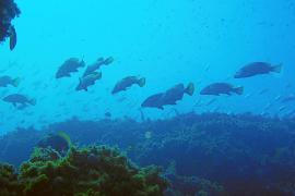 """Kein Harpunenfischen mehr im Schutzgebiet """"Llevant"""""""
