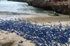 Die Cala Egos im Südosten von Mallorca erlebte am Sonntagnachmittag eine Invasion von blauen Segelquallen.