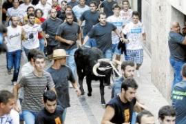 Tierschutz kontra Tradition