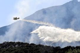 Erster Großbrand 2016 vernichtet 10 Hektar Wald