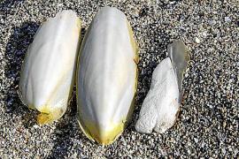 Angriff und Verteidigung des Tintenfischs