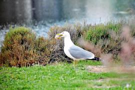 Eines der letzten Vogelparadiese