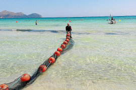 Barriere im Meer soll vor Quallen schützen