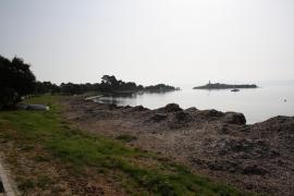 Posidonia am Strand von Alcanada.