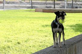 Parkbesucher fühlen sich durch die freilaufenden Hunde belästigt
