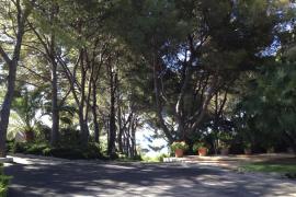 Marivent-Garten schließt bei Königsbesuch