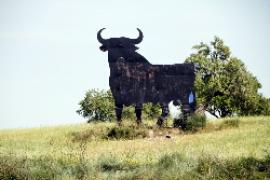 Stier sieht wieder schwarz