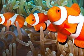 Palma Aquarium – eines der besten in ganz Spanien