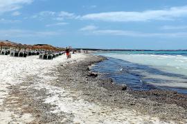 Der Strand von Es Trenc auf Mallorca mit dem ökologisch wichtigen Neptungras.