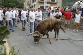 Proteste und zwei Verletzte beim Stierlauf Fornalutx