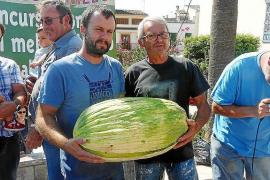 19,4 Kilo schwere Melone siegt in Vilafranca