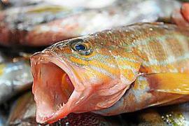 Wissenschaftler warnen vor hohem Anteil an Quecksilber im Fisch