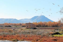 Endesa überlässt GOB eine Finca im Naturschutzgebiet S'Albufera