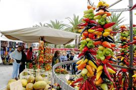 Herbstzeit ist auf Mallorca Firazeit