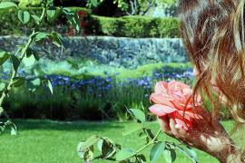 Experten-Tipps: So blüht und grünt es im mediterranen Garten