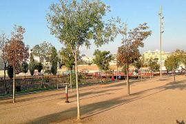 Bäume im Sa-Riera-Park wachsen nicht