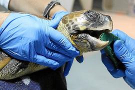 """""""Reha"""" für die Schildkröten"""