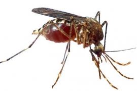 Selbst Ende Oktober stechen die Mücken noch