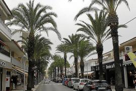 Can Picafort bald ohne Palmen?
