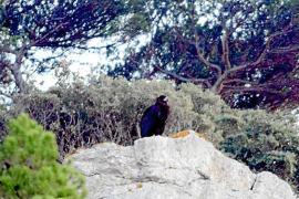 """Dieses Foto von """"Zarza"""" hat Tierschützer Joan Florit auf Menorca gemacht."""